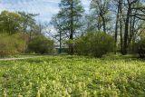 Парк Ботанического института РАН