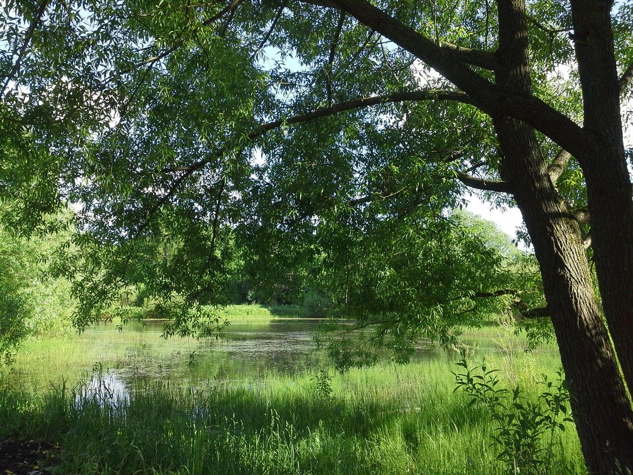 Бутовский лесопарк картинки