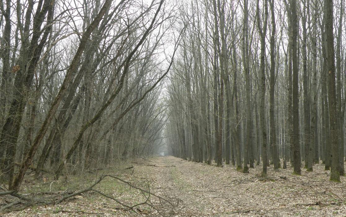 условия александровский лес ростовская область фото лысый