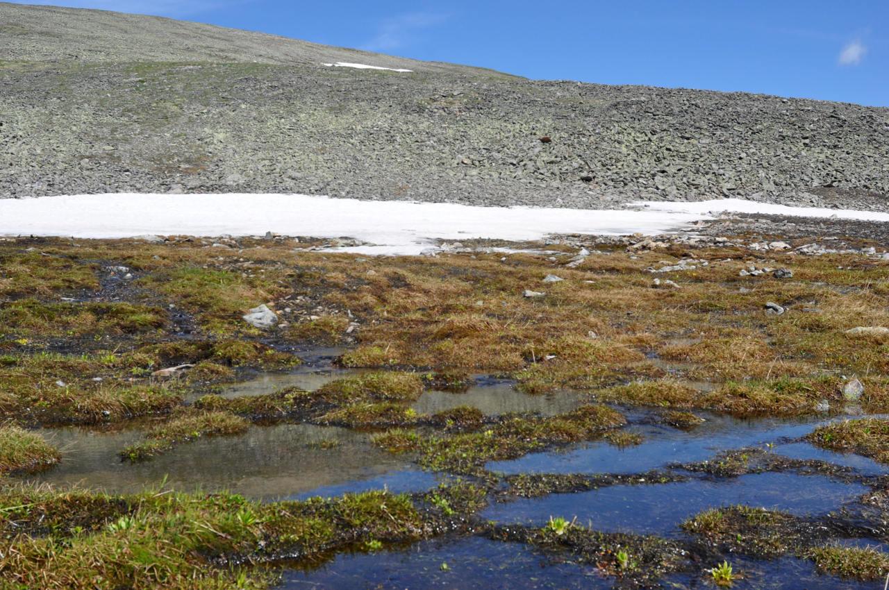 но, картинка болота в тундре которые