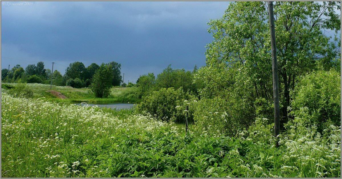http://www.plantarium.ru/page/landscape/id/5370.html