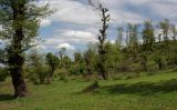 Гирканский лес