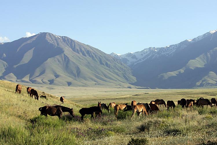 Картинки о климате казахстана