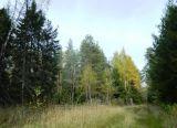 Окрестные леса станции Пожога