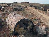 Окаменевший лес в Патагонии