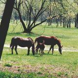 Кишинёвский парк «Дендрариум»