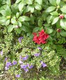 Ботанический сад в Трое