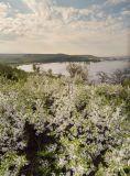 Правый берег реки Зай