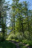 Петровщинская роща и луга