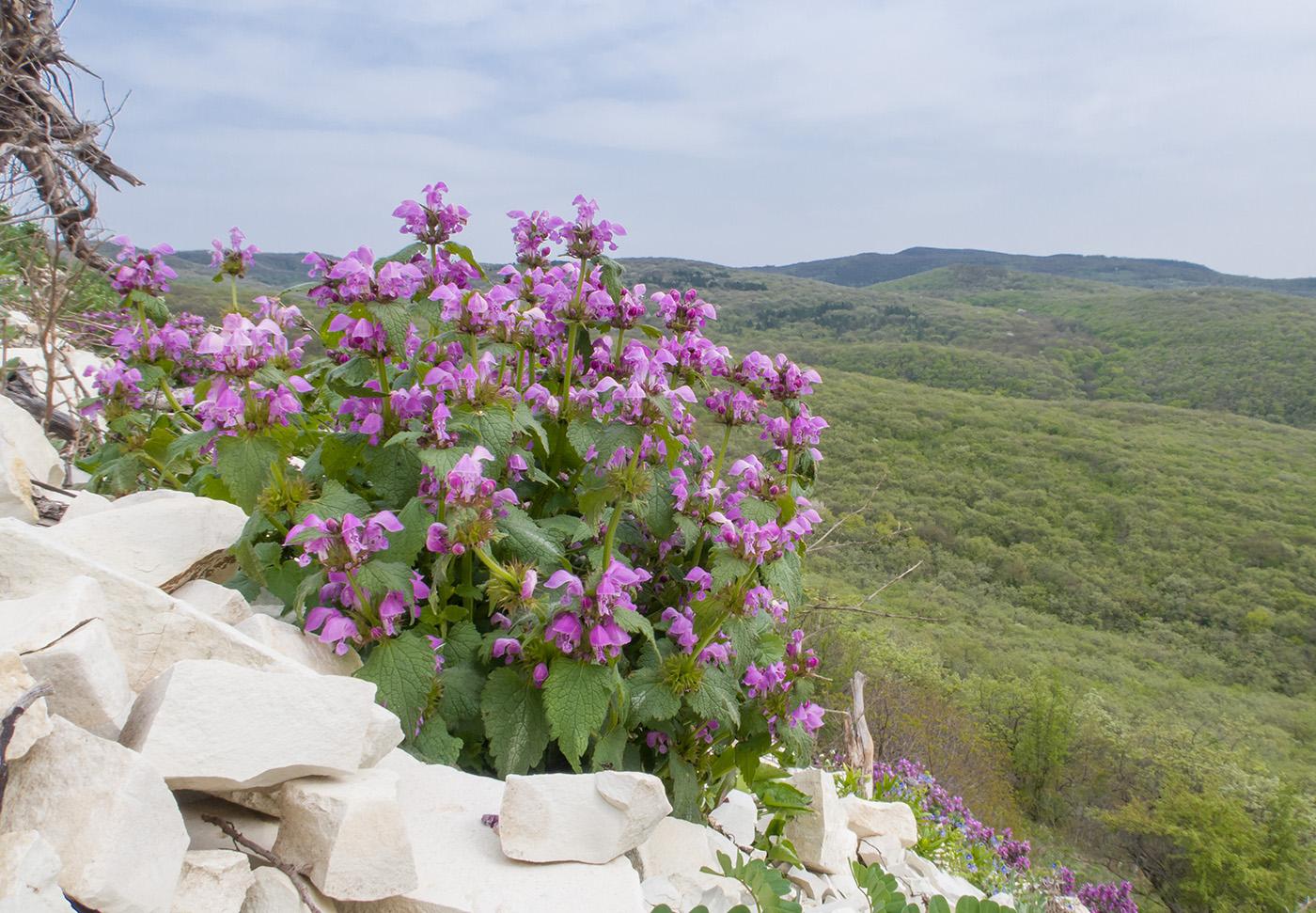помогает сжигать горные цветы краснодарского края фото названия также