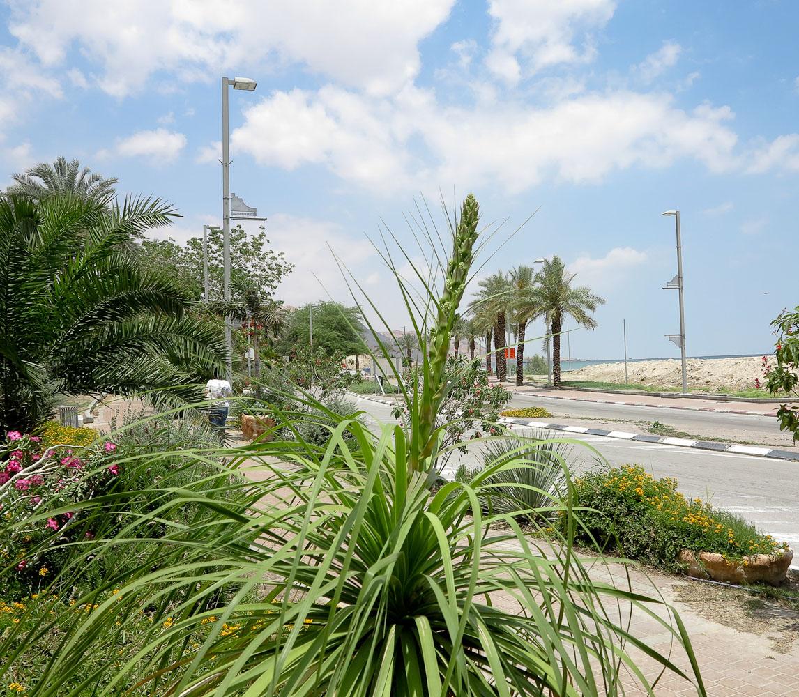 после растения израиля в картинках данном обзоре расскажем