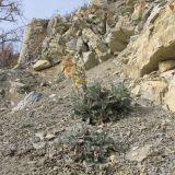 http://www.plantarium.ru/dat/plants/0/081/227081.jpg
