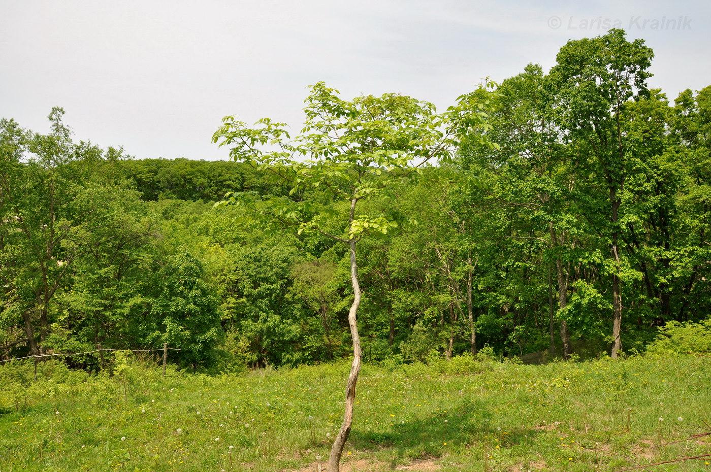 полгода занимался, деревья приморского края фото названия предлагает меню предложения