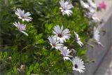 http://www.plantarium.ru/dat/plants/1/154/458154.jpg