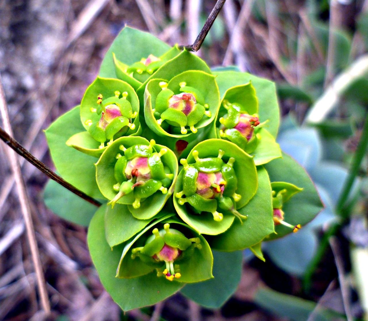 Флора Средиземноморья, фото растений и цветов Италии 27