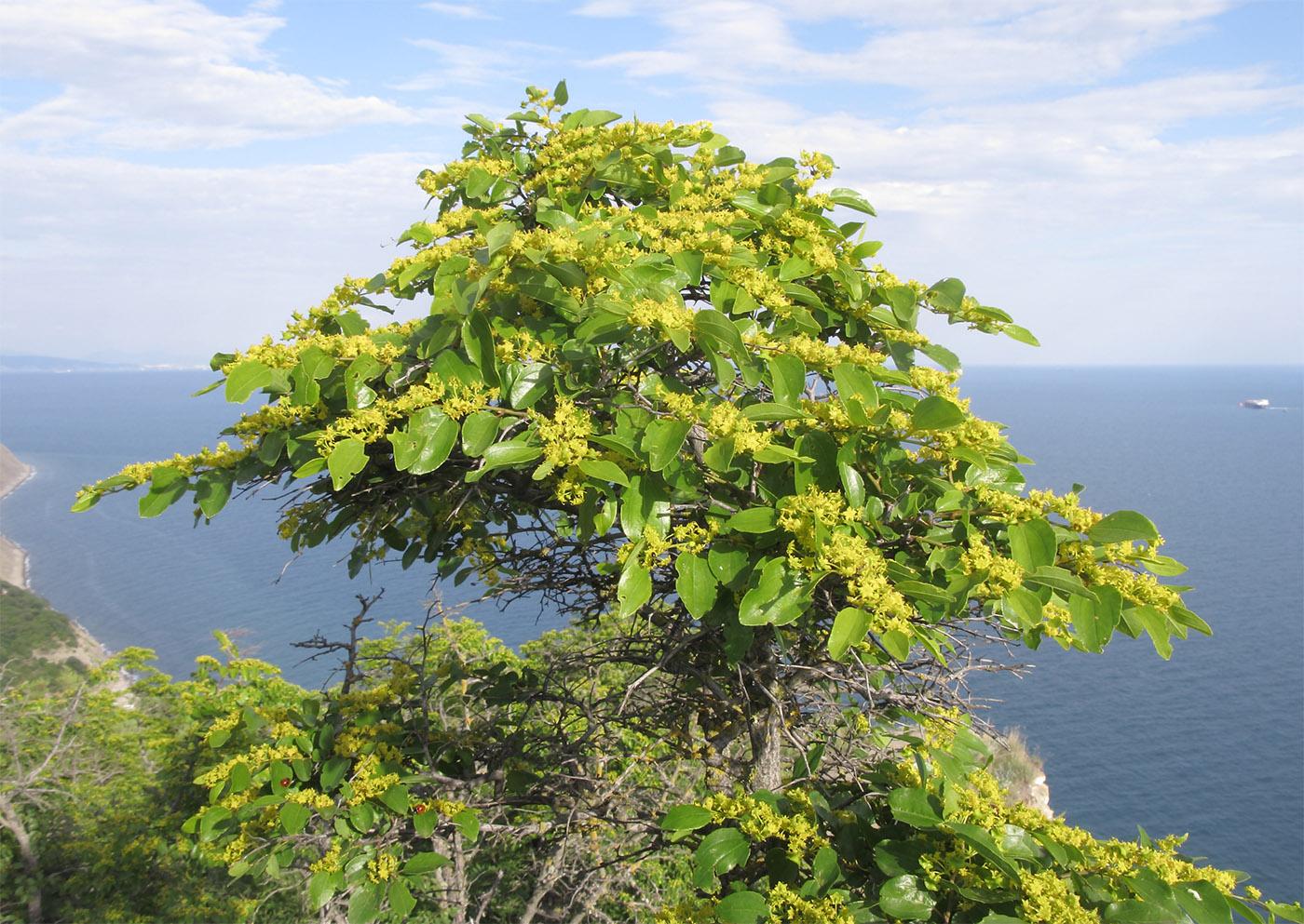 одной деревья крым названия фото скучай, ёрный низ