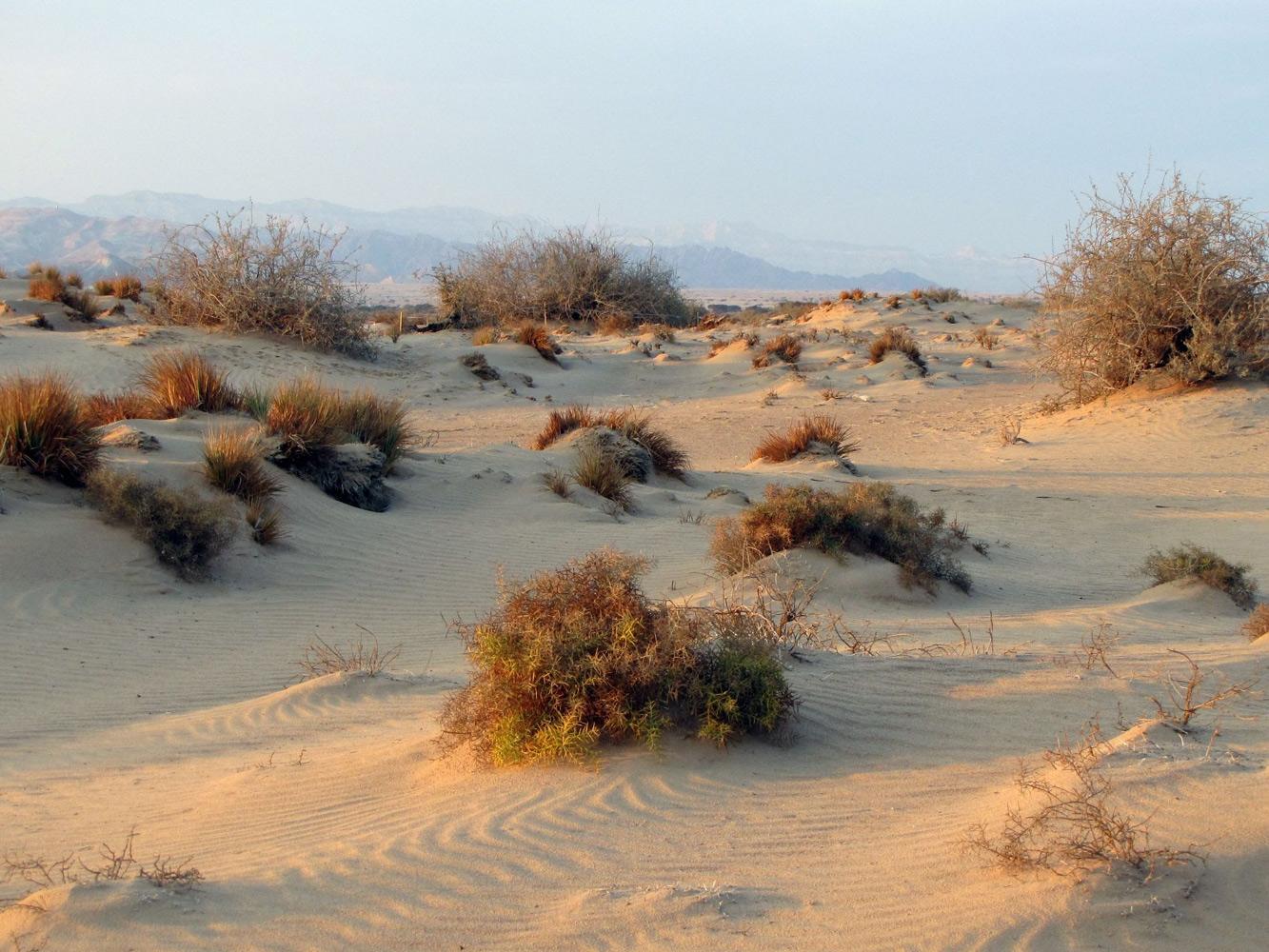 Рослини в пустелі фото 7 фотография