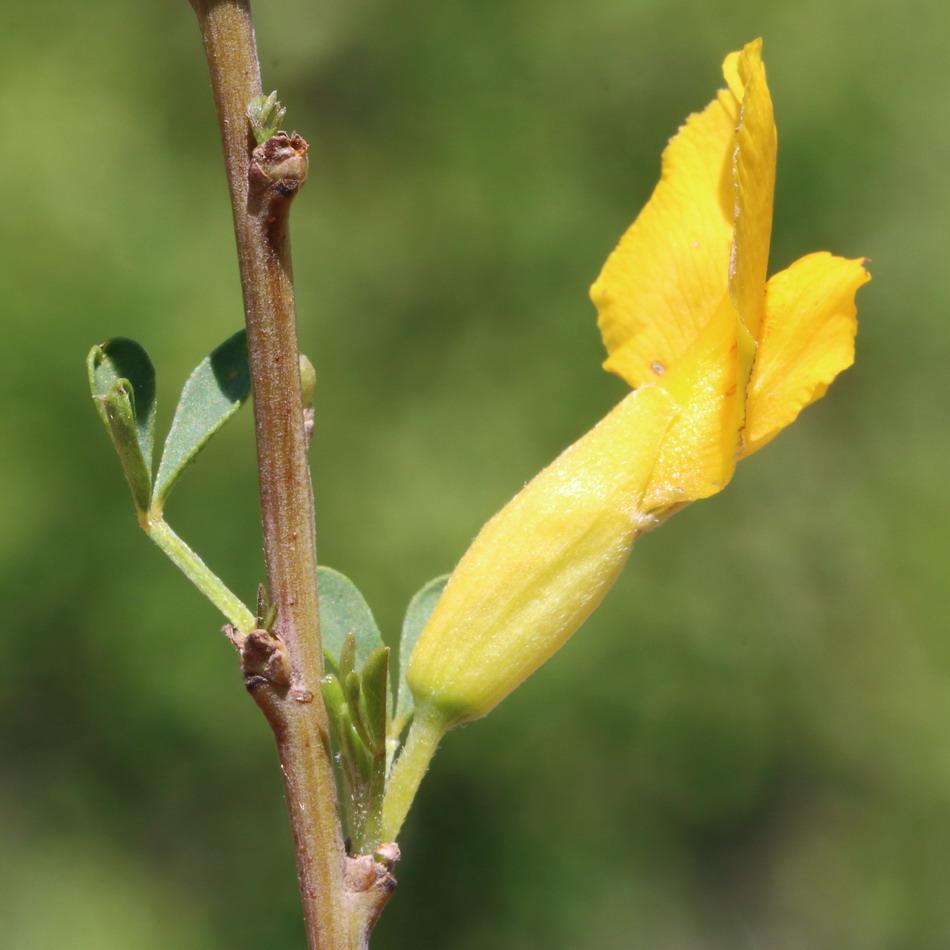 http://www.plantarium.ru/dat/plants/2/221/407221_7dd13b27.jpg