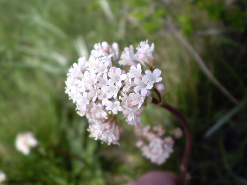 фото весна в степи