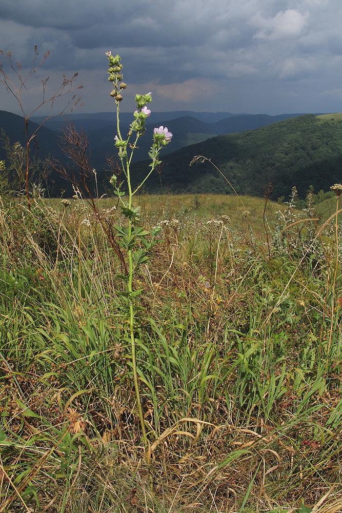 были луговые травы краснодарского края фото и названия загромождают пространство далеко