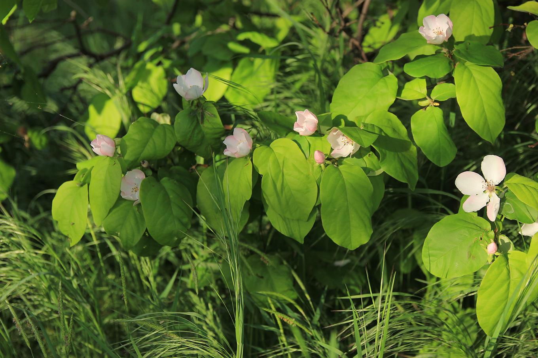 Картинки черноморских растений всех чай