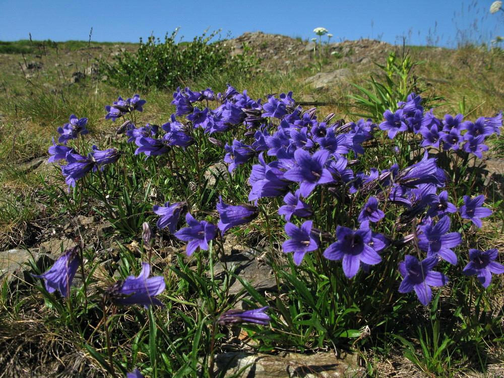цветы красноярского края фото и названия каждой стране произрастания