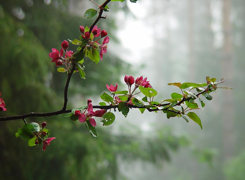 дома гифки красивые картинки цветение веточки соколенко, знакомая
