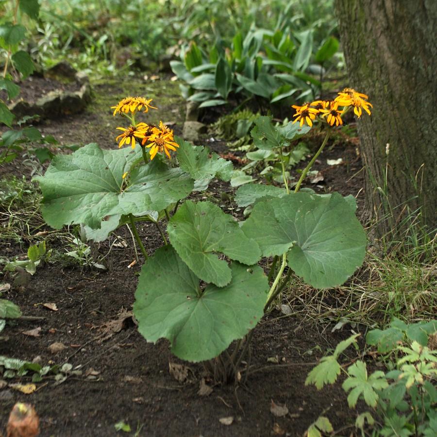 Цветущее растение санкт петербург в