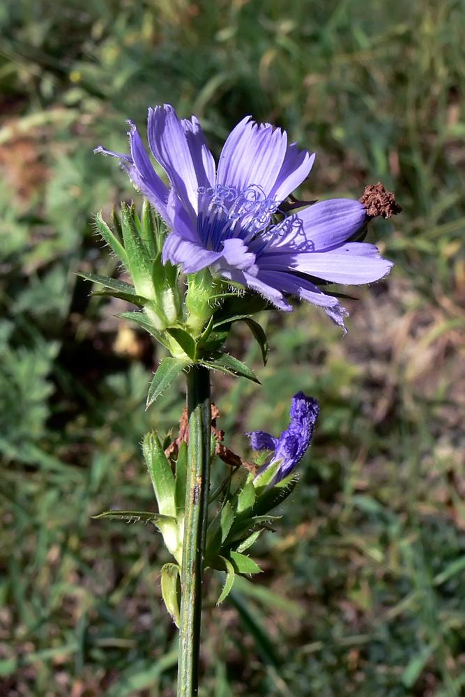 полевые цветы омской области фото и названия пьехи добавила, что