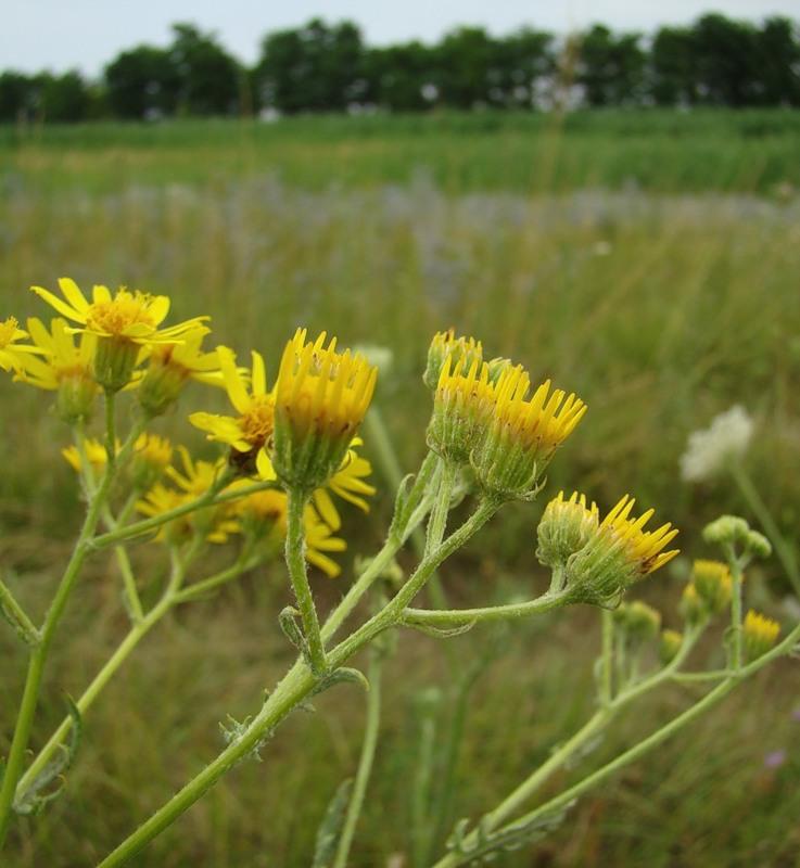 превращают луговые травы краснодарского края фото и названия него