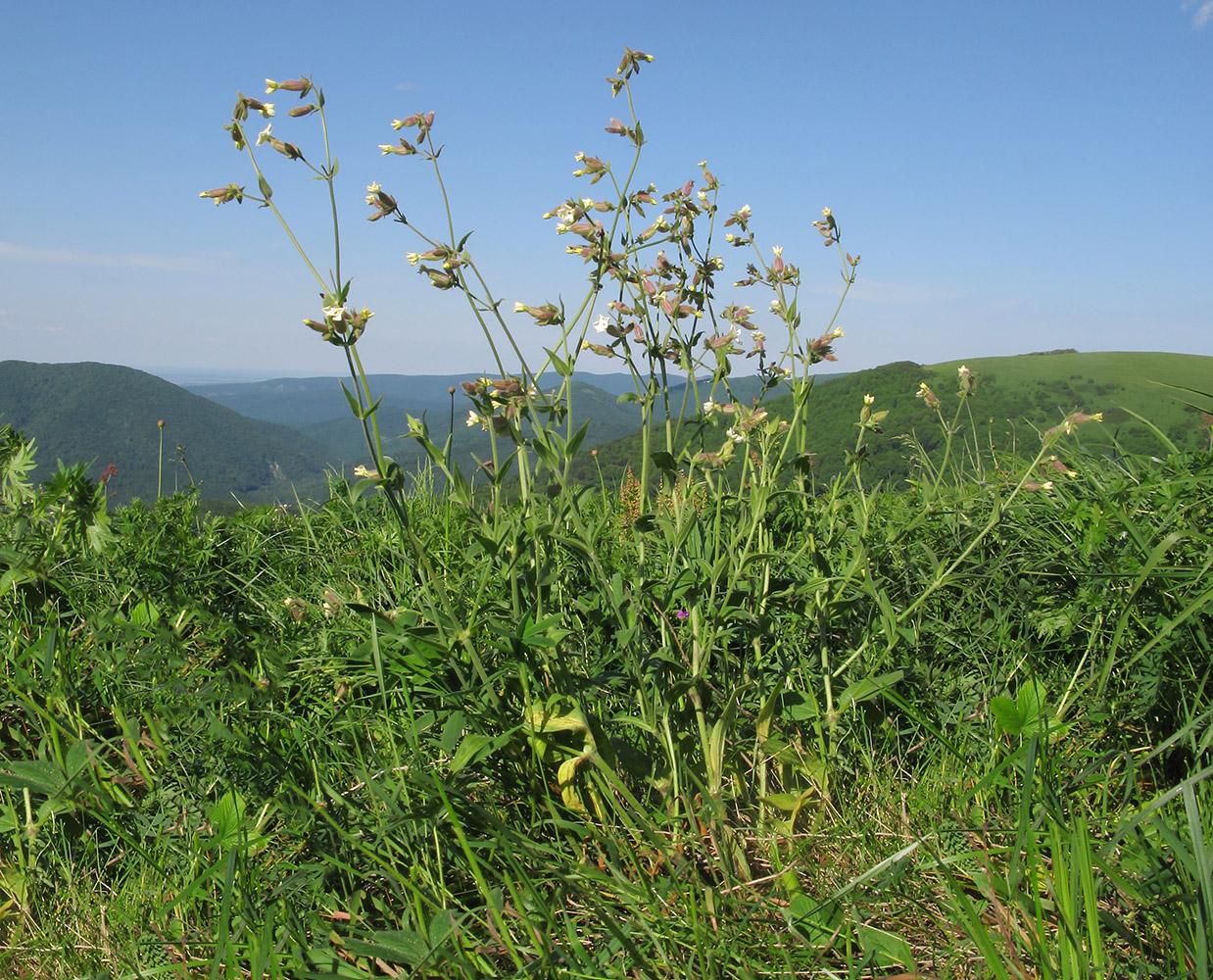 последнего луговые травы краснодарского края фото и названия засовывает свой
