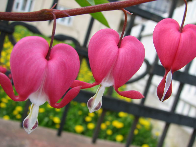 Красивые цветов и названием