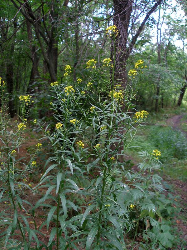 Овальные растения
