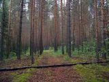 http://www.plantarium.ru/dat/img/7419.jpg