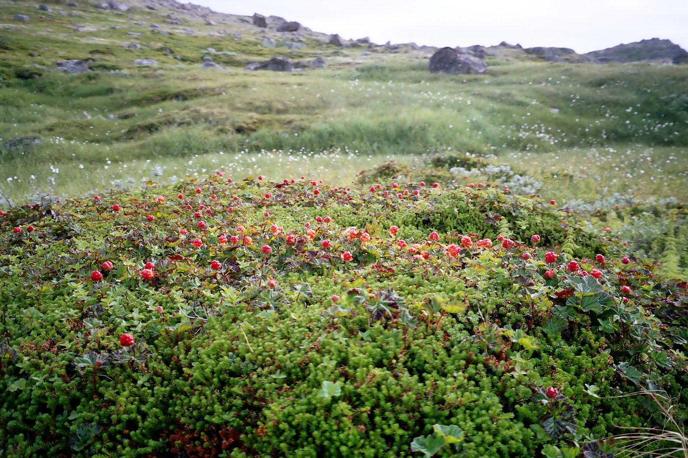 http://www.plantarium.ru/dat/plants/4/457/452457_8f1619f6.jpg