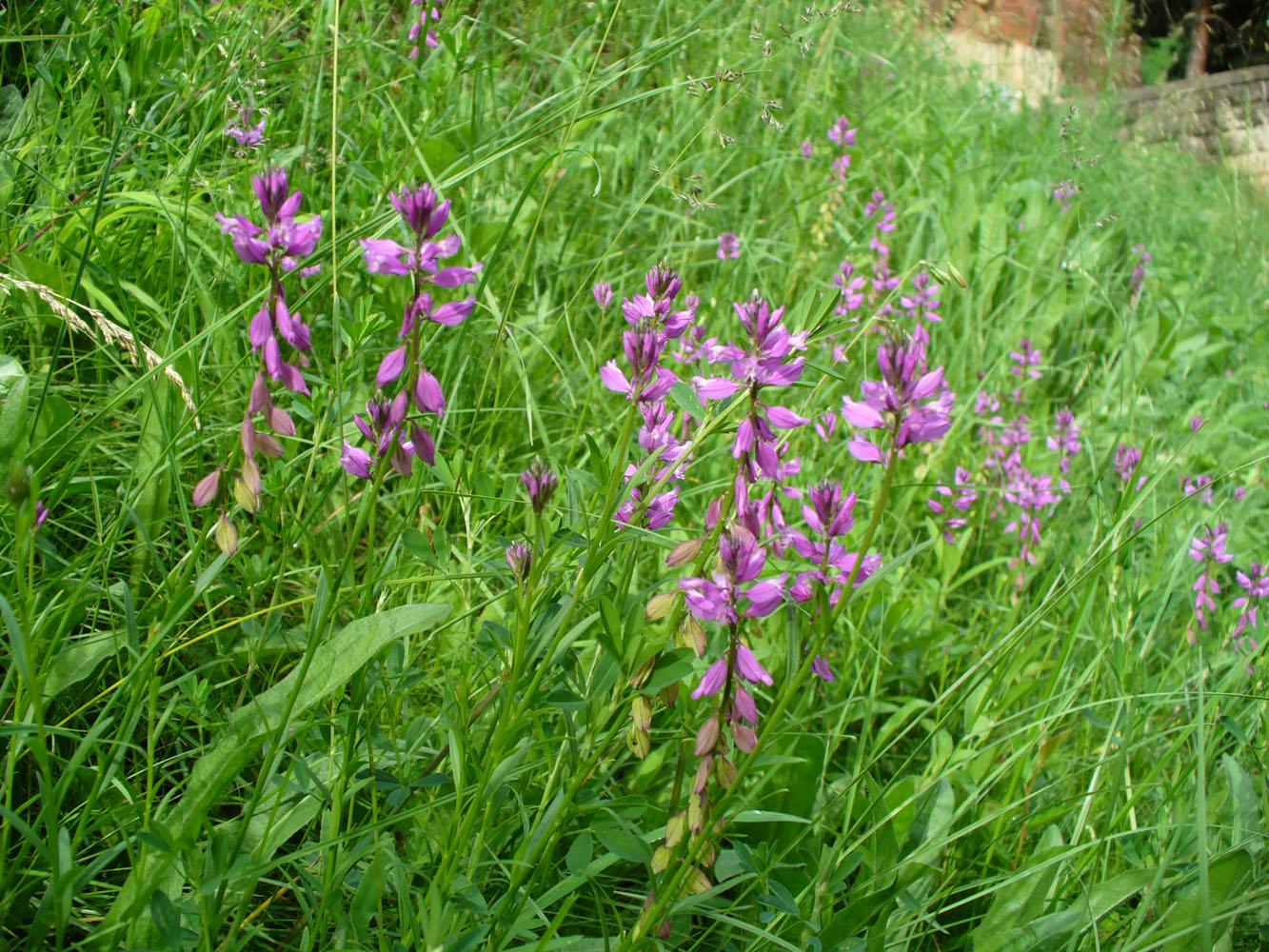 полевые растения ставропольского края фото словами