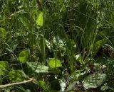 Изображение растения автор анна