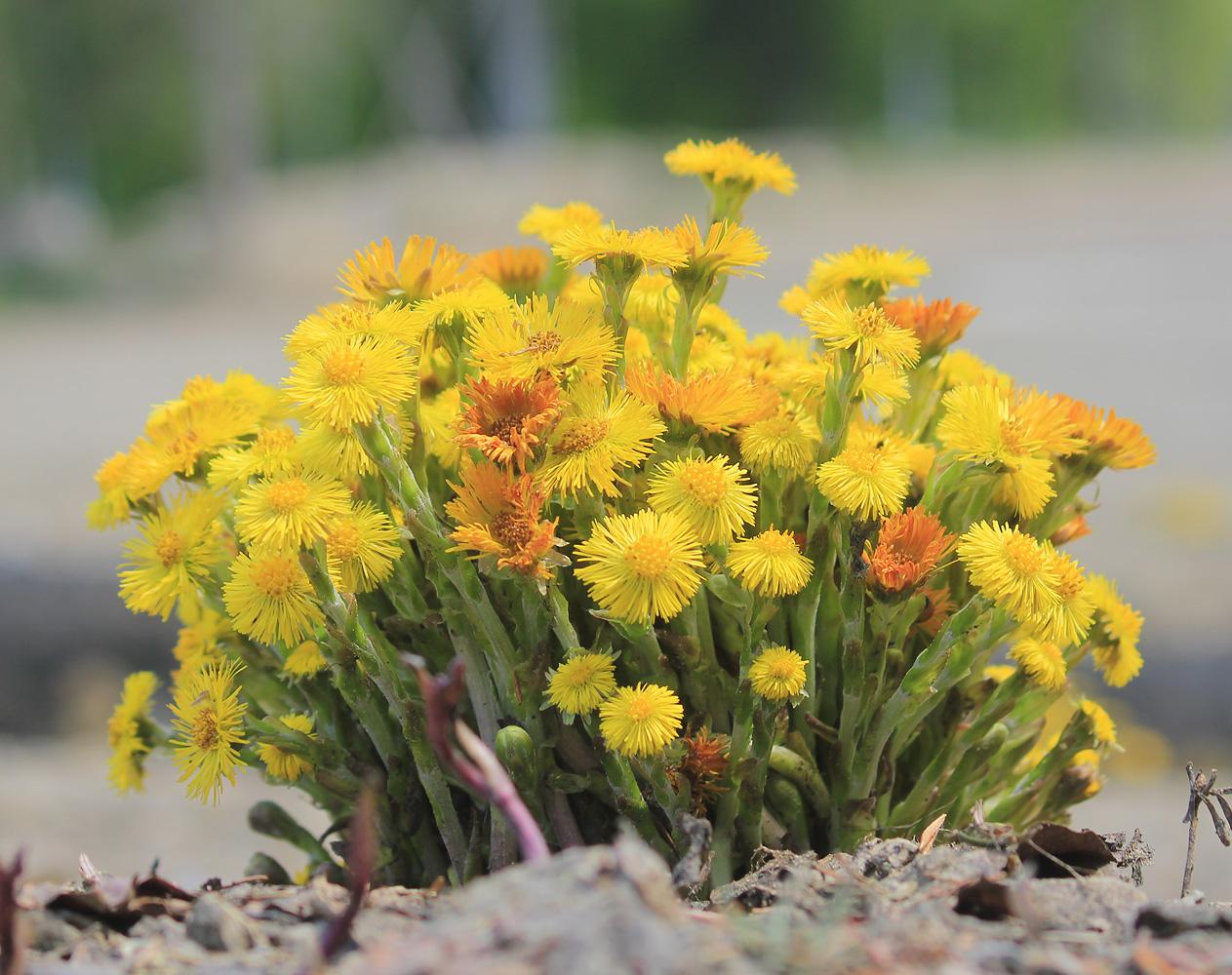 http://www.plantarium.ru/dat/plants/5/536/414536_de4084a4.jpg