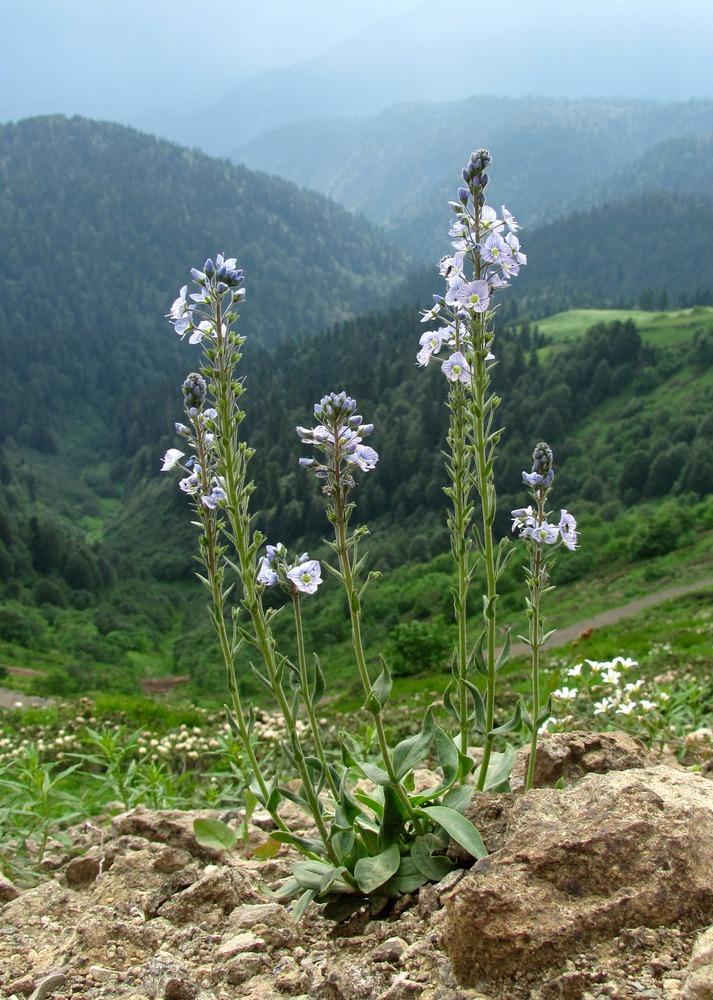горные цветы краснодарского края фото названия семь самых