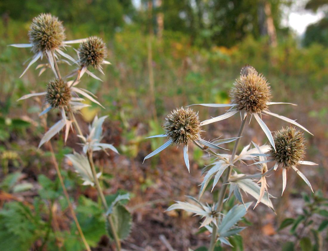 Сообщение фотосинтез растений тетрадь