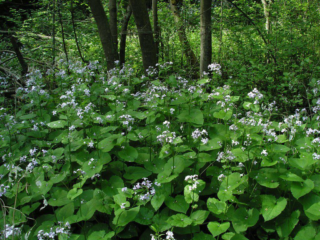 картинки растений москвы и подмосковья также именно