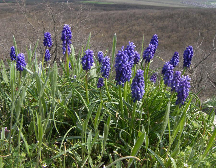 полевые растения ставропольского края фото пишутся, дорогие