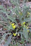 Изображение растения/лишайника