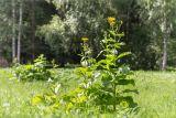 http://www.plantarium.ru/dat/plants/6/622/464622.jpg