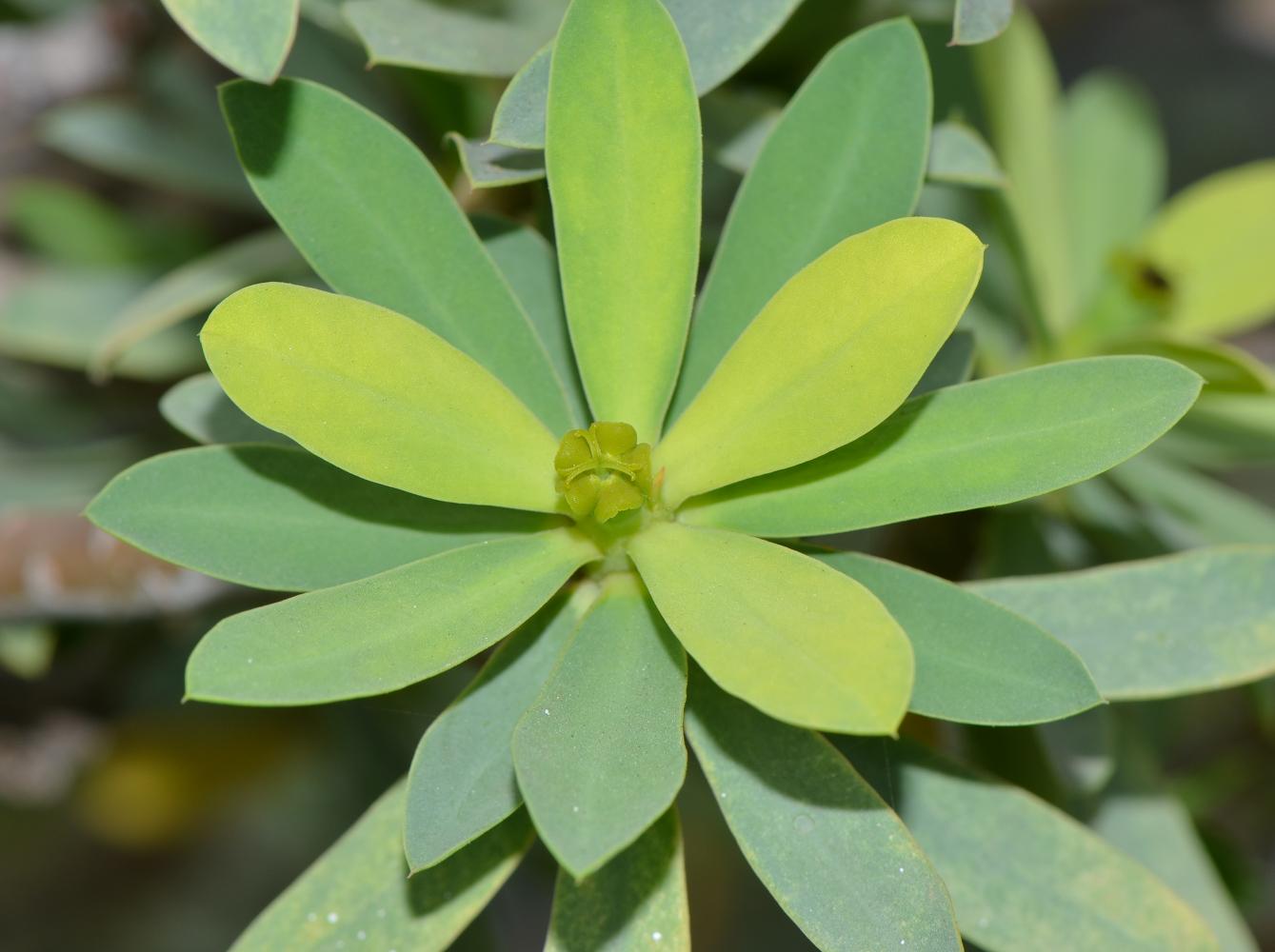 Флора Средиземноморья, фото растений и цветов Италии 79