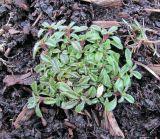 http://www.plantarium.ru/dat/plants/6/640/605640.jpg