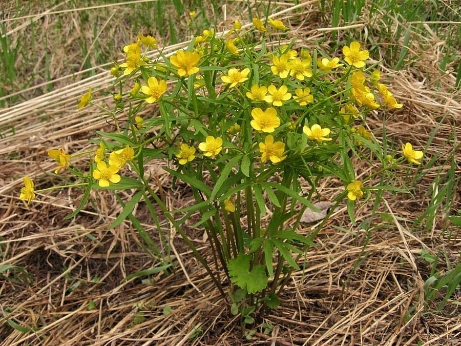 Растения в лугу с фото 3398