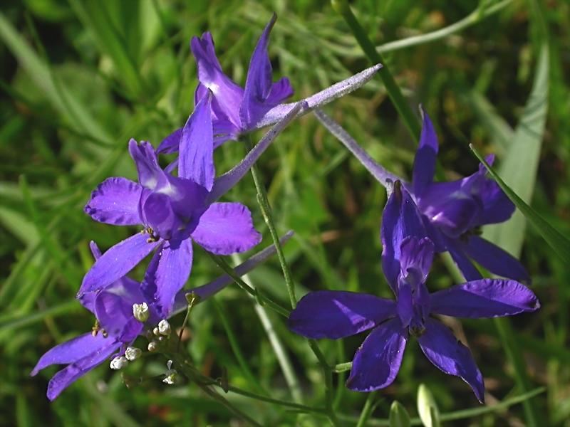 Дикие цветы и дикорастущие растения в саду: названия, списки