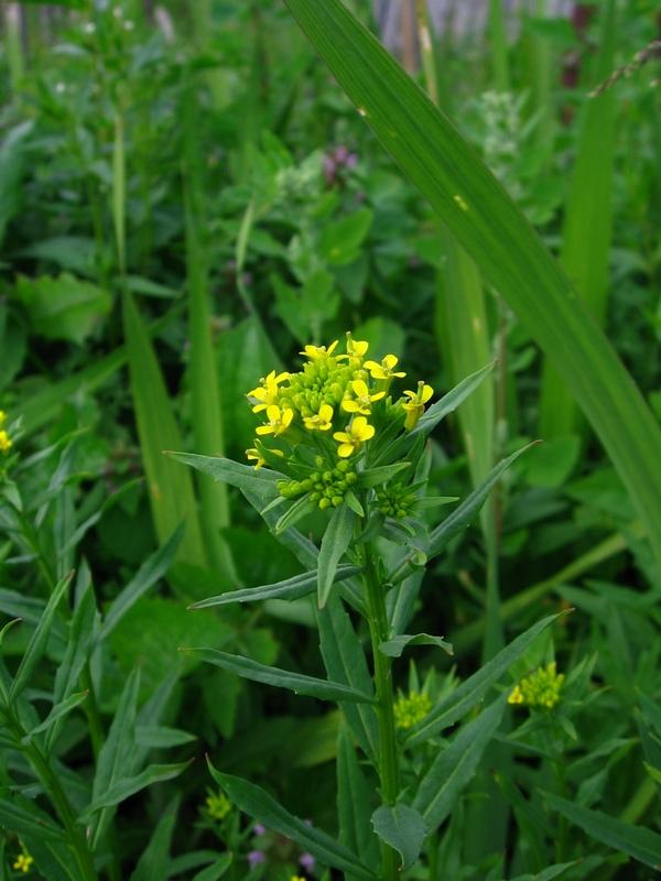 Цветущее растение санкт петербург