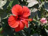 Изображение растения автор сергей